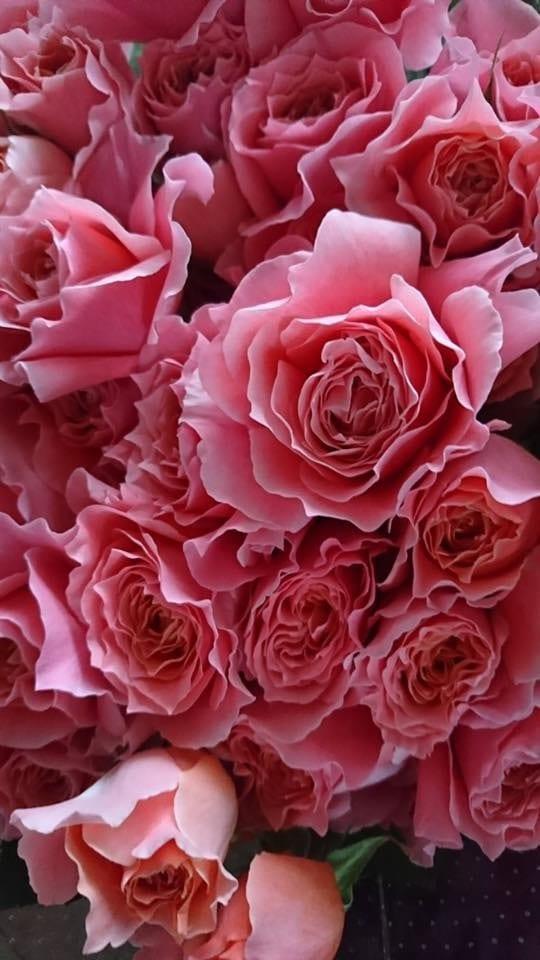カフェレストラン バオバブ   お花の販売♪3/16の11:30〜16:30♪