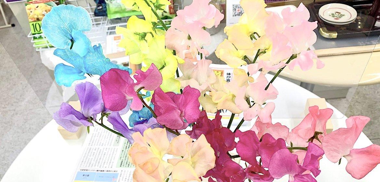 免疫力アップ 健康 漢方 CELL(セル)ヒーリング【モリタ薬局】三重県伊勢