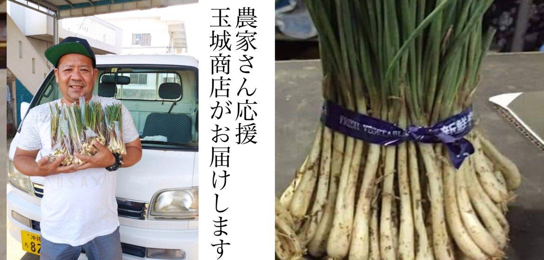 人もモノも地産地消 うるま市の沖縄島やさい玉城商店の農家応援ショップ