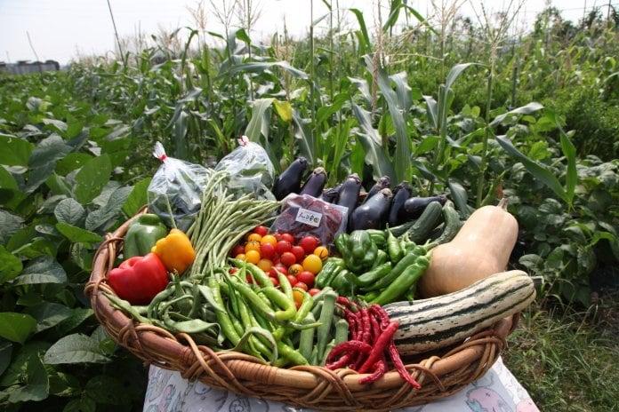 愛知県で無農薬・自然栽培で育てた安心・安全な産直野菜なら『モールdeノーマ農園』!!