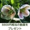 【6月30日まで限定】動画プレゼント(8800円相当)