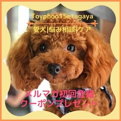 30分愛犬ご相談/30名様限定/オンライン会議アプリ「zoom」にて