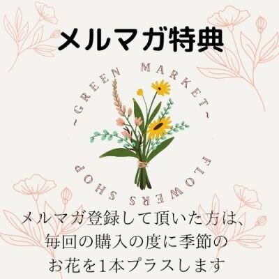 【お会計時¥1000円オフ】12月末日まで