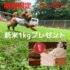 【期間限定 新米1kgプレゼント】 予約制ドッグラン 1家族 1時間無料クーポン