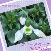 Healing&Reading  スノードロップ( ichiko☆)