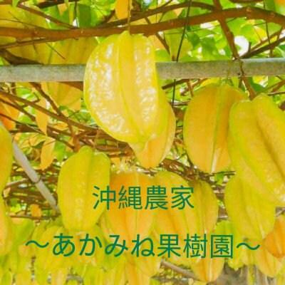 沖縄のあかみね果樹園
