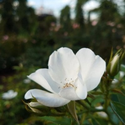 ヒーリングサロン spica flower(スピカフラワー)