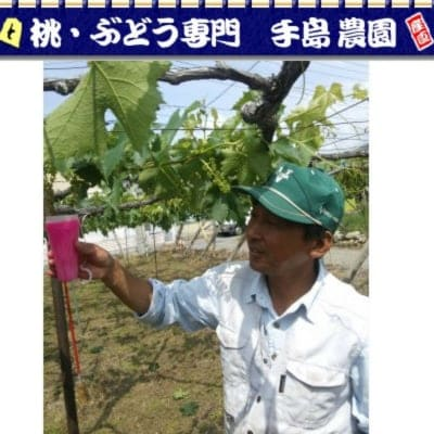 手島農園〜山梨のぶどう産直・体験農園・食&心の健康セミナー