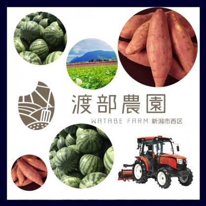 新潟市西区野菜通販のお店/渡部農園−WATABE FARM−