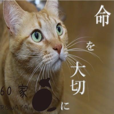 町の地域猫 保護猫活動 にゃんこの里 60家 (ロワや) 〜殺処分0へ〜