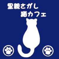 新潟市 里親さがし猫カフェ〜おっぽ〜