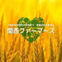 自然に優しく、人にも優しい野菜/大阪府岸和田市/関西ファーマーズ
