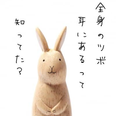耳ソロジー・バッチフラワー〜自然療法ナチュロパシースクール〜