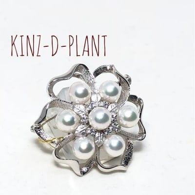 KINZ D PLANT