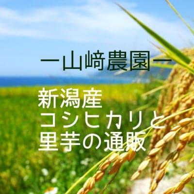 新潟県産こしひかりとさといもの通販/山崎農園-YAMAZAKINOUEN-