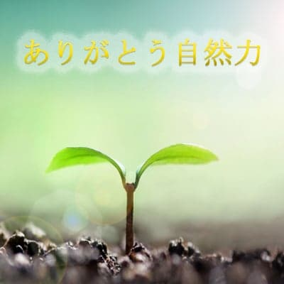 ありがとう自然力 〜自然の力で皆様の美と健康そして地球環境に貢献〜