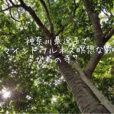 """神奈川県逗子でマインドフルネス瞑想なら""""びわの寺"""""""