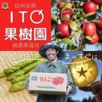 長野県飯綱東高原農場/ITO果 樹 園