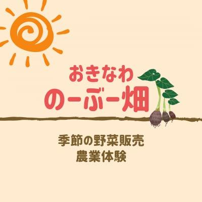 沖縄/農業体験/自然栽培/無農薬野菜/スターフルーツ「のーぶー畑」