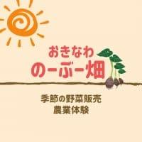 沖縄/農業体験/自然栽培/無農薬栽培「のーぶー畑」