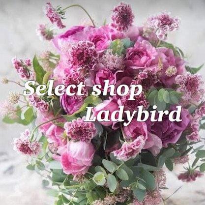 Ladybird/レディーバードセレクトショップ