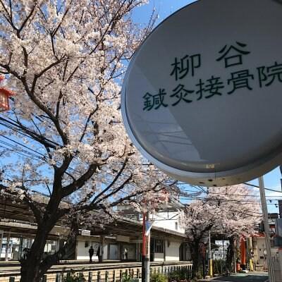 西東京市 東洋医学の鍼灸治療と身体機能を変化させる重心のコントロール   柳谷鍼灸接骨院