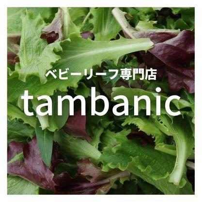 tambanic