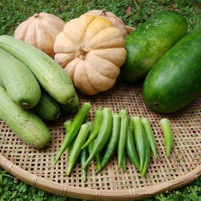 沖縄 島袋農園 無肥料・無農薬 野菜