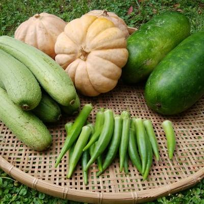 沖縄 島袋農園 無肥料・無農薬野菜
