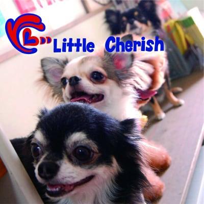 松山市のペットショップ Little Cherish〜リトルチェリッシュ〜