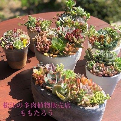 松江市の寄せ植え教室 Le-cactus(ル-カクタス)