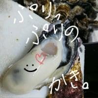 (有)木村水産| 広島県江田島産の海のミルクをお届けします|牡蠣(かき•カキ)
