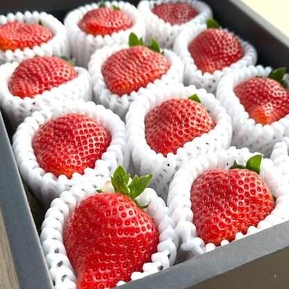 宮本宗吉農園(福岡/志賀島/あまおう通販)