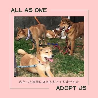 ALL AS ONE|保護犬たちを新たな幸せへ繋ぐ|動物保護活動|岡山