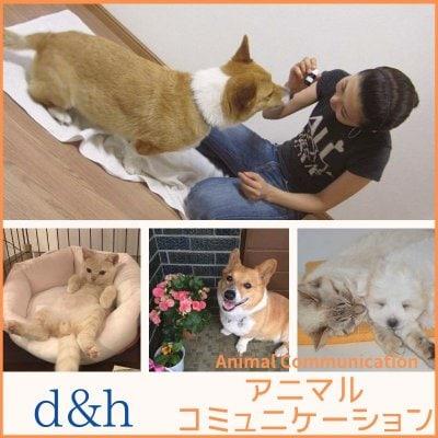 愛犬・愛猫・ペットの気持ちが知りたい!アニマルコミュニケーションで動物のお悩みを解決☆ d&h