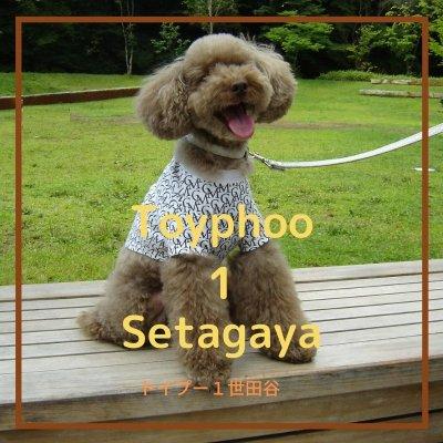 愛犬トイプー1世田谷