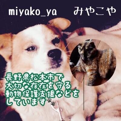 長野県松本市|動物保護支援応援ショップ|大切な存在を守りたい|miyako_ya~みやこや~