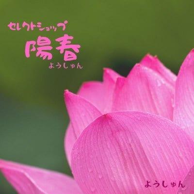 沖縄 いろいろセレクト陽春