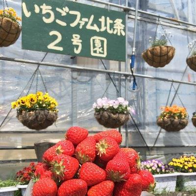愛媛県いちご通販【いちごファーム北条】とっくんのイチゴハウス