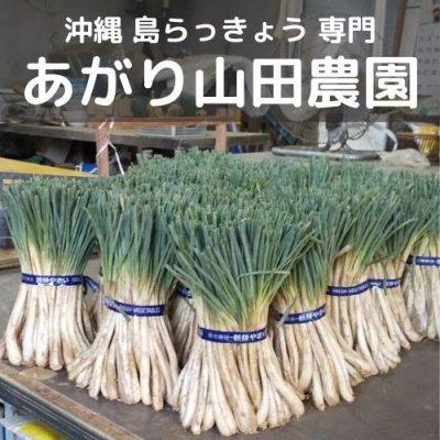沖縄島野菜ならお任せ|うるま市産新鮮お野菜|島らっきょう専門のあがり山田農園