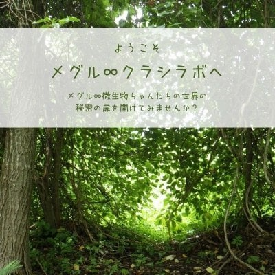 【メグルクラシラボ】持続可能・循環型生活のご提案・お掃除&お洗濯講座