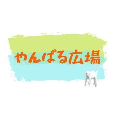 沖縄/辺野古/やんばる広場