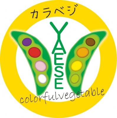 ナチュラルハウスdenenおきなわ/新鮮野菜とフルーツ/無添加/農業体験