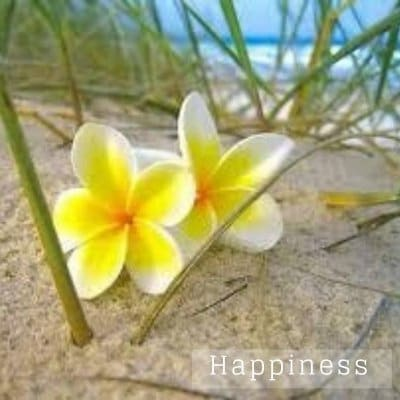 Happiness ハピネス