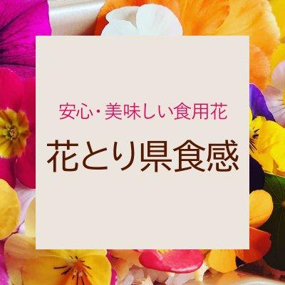 < 農薬・化学肥料不使用>鳥取県産 食用花 エディブルフラワーの生産・販売は【花とり県食感】