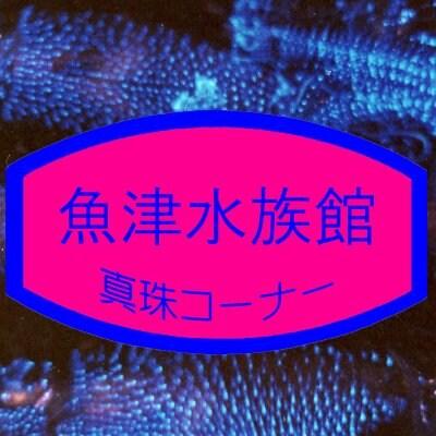 [魚津水族館真珠コーナー]お土産/富山県/魚津市観光