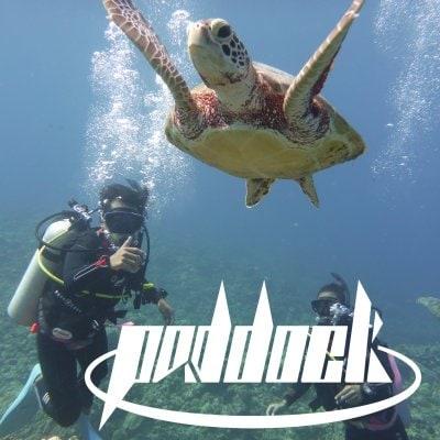 沖縄ダイビングライセンス講習はpaddock(パドック)へ