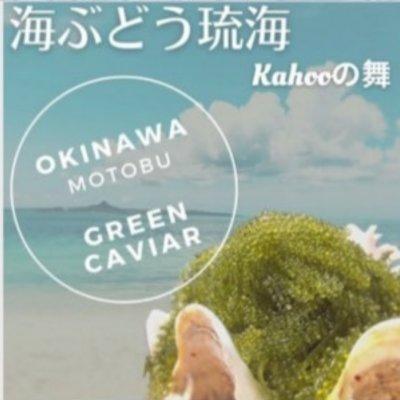 沖縄 海ぶどう琉海