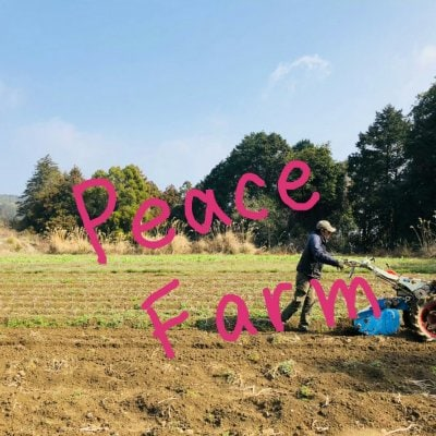 ピースファーム 長崎市 有機JAS認証 オーガニック野菜栽培 有機野菜栽培