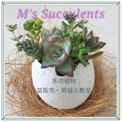 多肉植物販売店 エムズサキュレント    M's Succulent